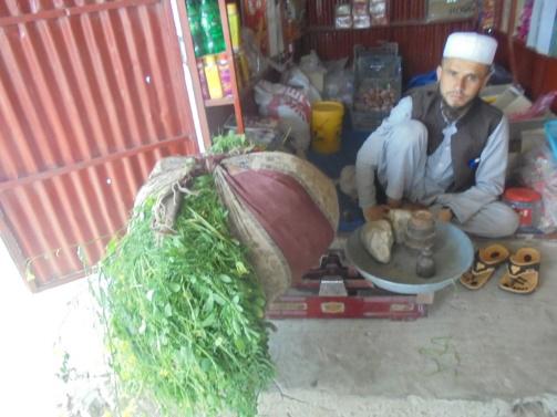 Prevoir-lhiver-cultiver-et-conserver-du-fourrage-pour-nourrir-le-betail
